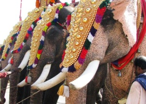H Kerala, impromptu elephant festival