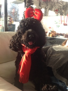 Miss Maisy at Christmas